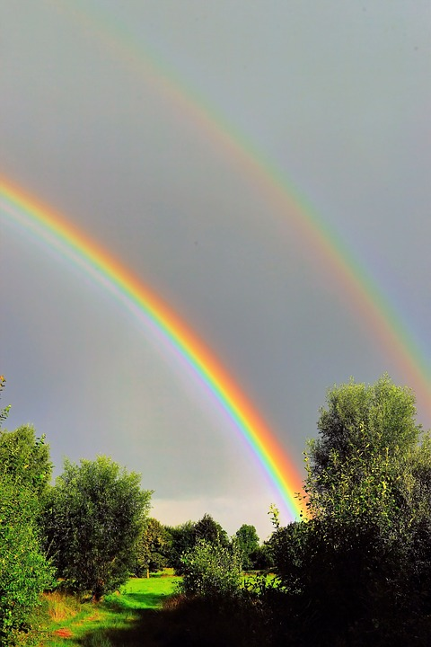 Double rainbow over trees