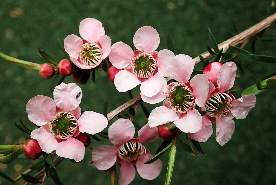 flowers-3736754_960_720